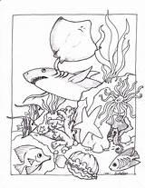 Coloring Ocean Pages Creatures Printable Sea Preschool Adult Underwater Oceans Undersea sketch template