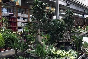 Palmen Kaufen Baumarkt : baumarktbonsai bonsais im baumarkt kaufen bonsai kaufen ~ Orissabook.com Haus und Dekorationen