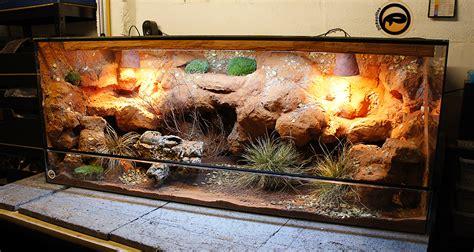lighting for bearded dragon vivarium ideas for bearded dragon terrarium decor