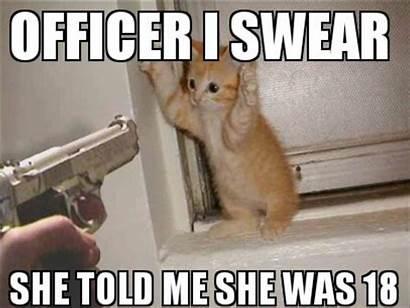 Funny Meme Cat Cool Humor Wallpapers Grumpy