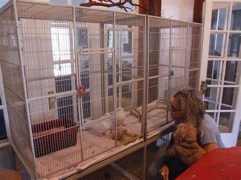 choose  cage  pigeons  doves