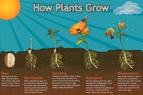 how to grow flowers character design blog header banner extreme collection ready website blog