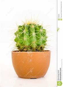 Pot A Cactus : small cactus in pot stock image image of thorn tree 24938699 ~ Farleysfitness.com Idées de Décoration