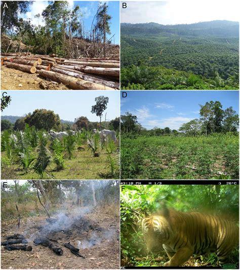 Global biodiversity loss from tropical deforestation | PNAS