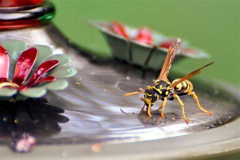 how to keep honey bees away from hummingbird feeders keep bees away from hummingbird feeders