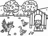 Chicken Coloring Coop Drawing Disegni Colorare Pollaio Gallina Gallo Template Disegno Scaricare Bambini Pulcino Galline Getdrawings sketch template