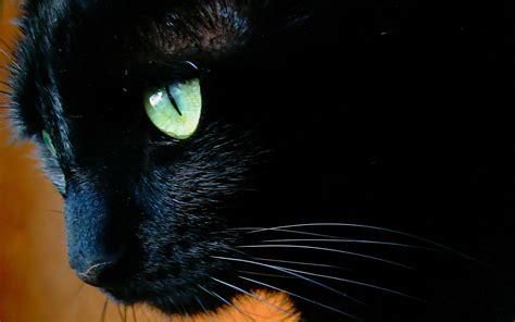 Black Cat Eyes Wallpaper Wallpapersafari