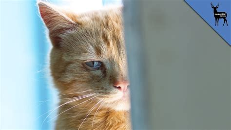 can cats cry crying animals www pixshark com images galleries with a bite