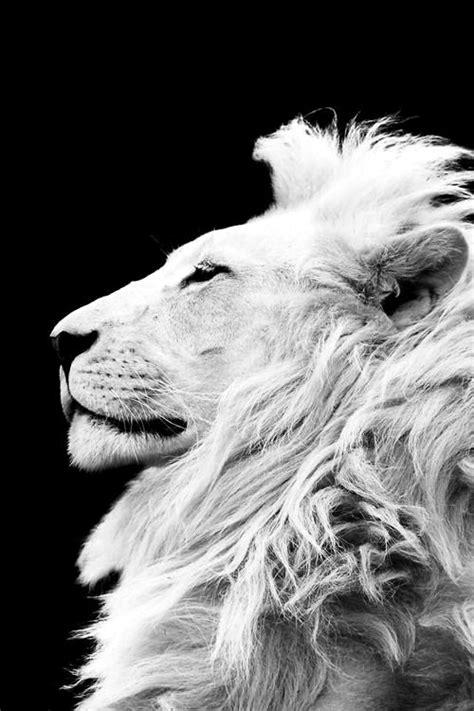 Lion King Beautiful Jungle