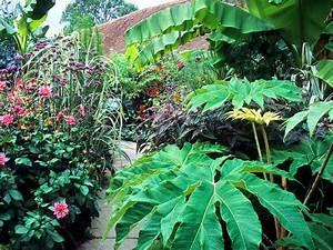 Plantes Exotiques Rustiques : feuilles exotique tout ~ Melissatoandfro.com Idées de Décoration