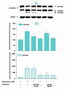 Glutamate-induced apoptosis in neuronal cells is mediated ...
