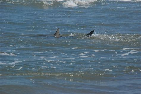 update  shark attack obx connection message board