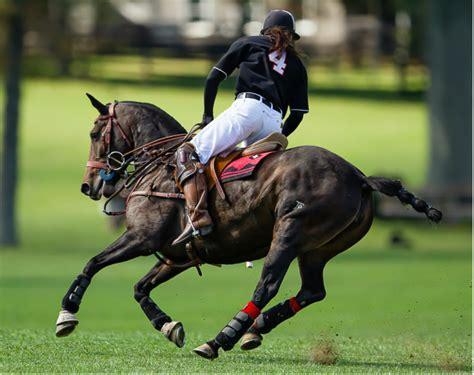 polo pony horses eagle string