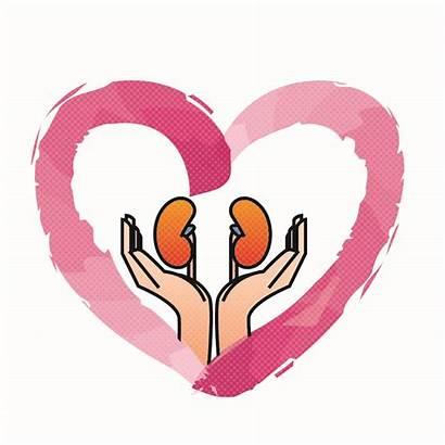 Kidney Clipart Health Kidneys Healthy Foods Foundation