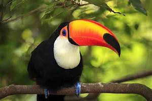 Toucan wallpapers, Animal, HQ Toucan pictures | 4K Wallpapers