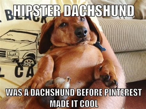 Dachshund Memes - best 25 dachshund meme ideas on pinterest wiener dogs funny dachshund and baby dachshund