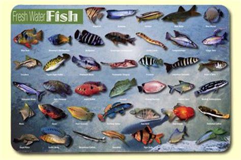 attuning freshwater fish and salmon with coryelle kramer