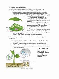 9 1 Transport In Plants Notes