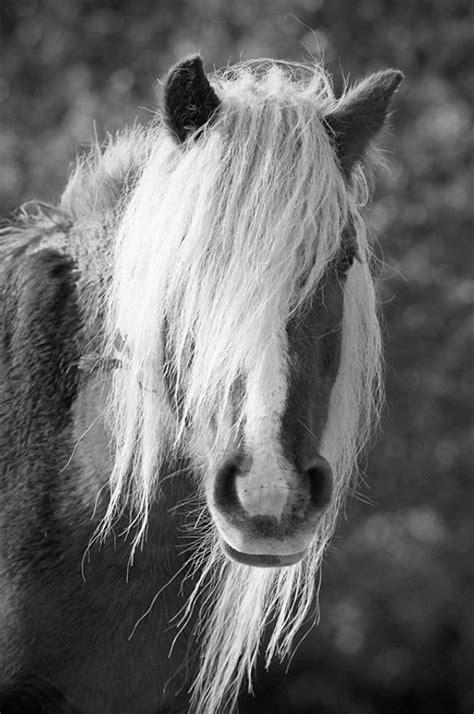 equine art horse photography fine art horse photo animal