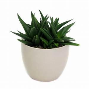Plantes Grasses Intérieur : plante grasse aldi belgique archive des offres promotionnelles ~ Melissatoandfro.com Idées de Décoration