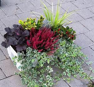 Kübelpflanzen Winterhart Bilder : pflanzen set f r balkonbepflanzung 80 cm pflanzen versand harro 39 s pflanzenwelt kaufen ~ Markanthonyermac.com Haus und Dekorationen