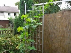 Gurken Im Kübel : gurken pflanzen auf dem balkon oder terrasse ~ Frokenaadalensverden.com Haus und Dekorationen