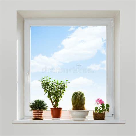 piante da davanzale piante della sul davanzale immagine stock