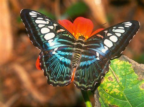 Fotos De Mariposas Hermosas  Holidays Oo
