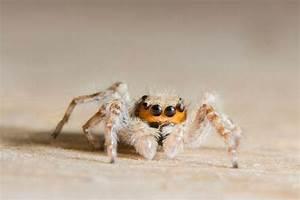 Se Débarrasser Des Araignées : quels solutions pour se d barrasser des araign es dakola ~ Louise-bijoux.com Idées de Décoration