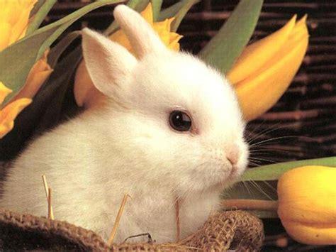 jeux de cuisine pour fille gratuit en ligne lapin blanc mignon
