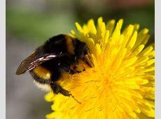 Another cute bumblebee – Short stories – Medium