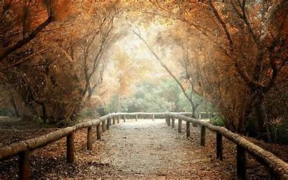 Screen Background Nature Path Wallpapers Tree Widescreen