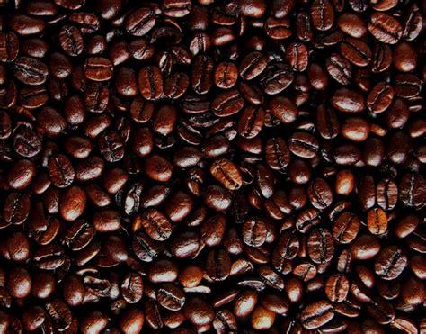 light roast coffee haitian roast coffee 5lb bag whole bean holy beans cafe