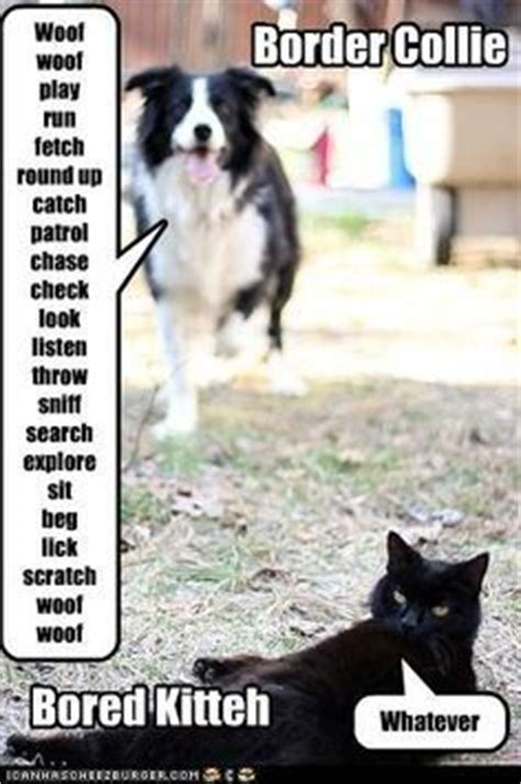 Border Collie Meme - border collie meme border collies pinterest border collies image search and search