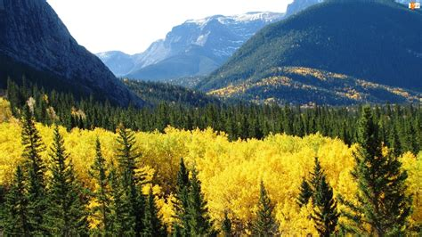 Góry, Kanada, Lasy, Alberta