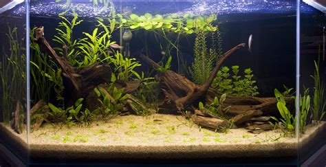 decorer un aquarium vide d 233 co terrasse aquarium