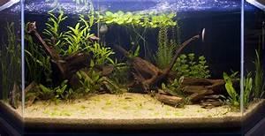 Idee Decoration Aquarium : id e d coration aquarium ~ Melissatoandfro.com Idées de Décoration