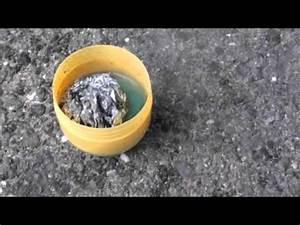 Kühlventilator Mit Wasser : alufolie reagiert mit wasser youtube ~ Jslefanu.com Haus und Dekorationen
