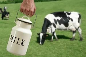 Diagram Of Cow Milk