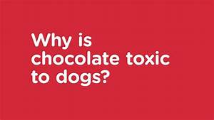 signs of chocolate toxicity in dogs