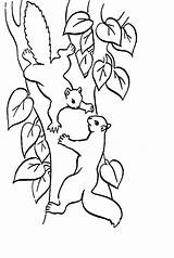 Squirrel Coloring Pages Printable Coloring2print sketch template