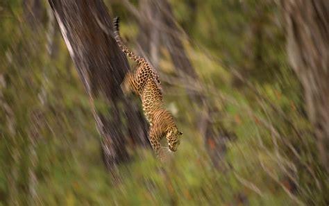 award winning wildlife photographs   year