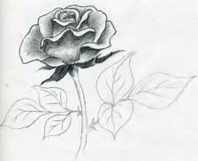 Easy Flowers Drawings In Pencil draw a rose quickly  simply and easily  Simple Drawing In Pencil