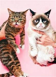1000+ images about Lil Bub on Pinterest | Grumpy cat, Cats ...