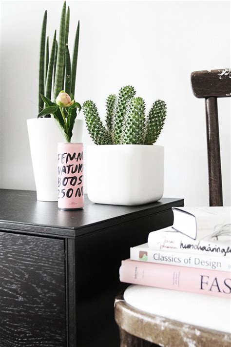 indoor cactus gardens home design  interior