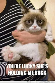 Cute Grumpy Cat Quotes