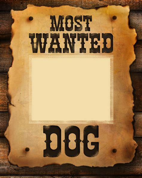 Most Wanted Dog - Dog International