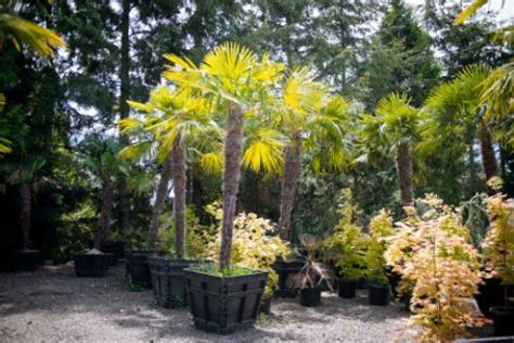 plants of the northwest plants northwest seattle s premier sources of wholesale plants for over 30 years