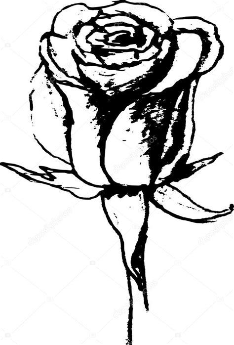 rosa preto e branco desenho desenhar mão Fotografias de