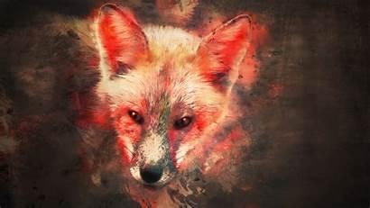 Fox Wallpapers Splash 3d Tori Kaki Animals